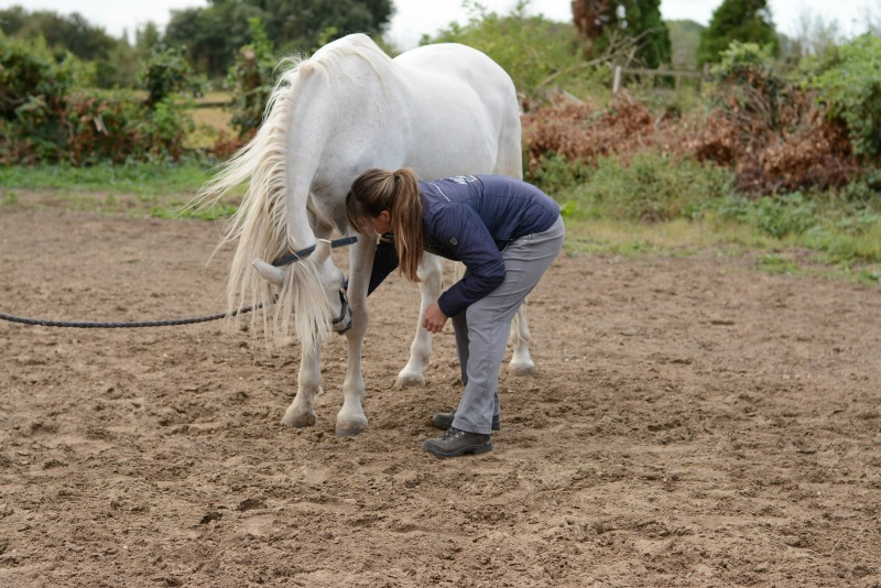 Carrot Stretch Exercises to improve horse's core and mobility - Head to Knees